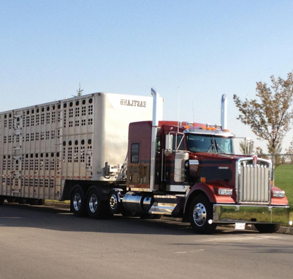 Temporary hours of service exemption for livestock haulers