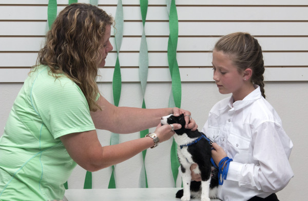 A woman inspects the eyes of a black and white cat as a young girl holds the animal in place.